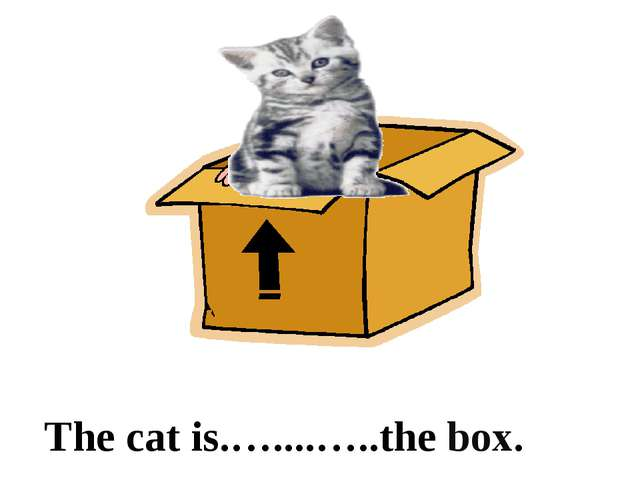 in The cat is.…....…..the box.