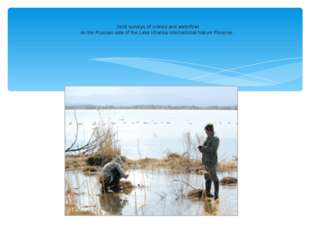 Joint surveys of cranes and waterfowl on the Russian side of the Lake Khanka
