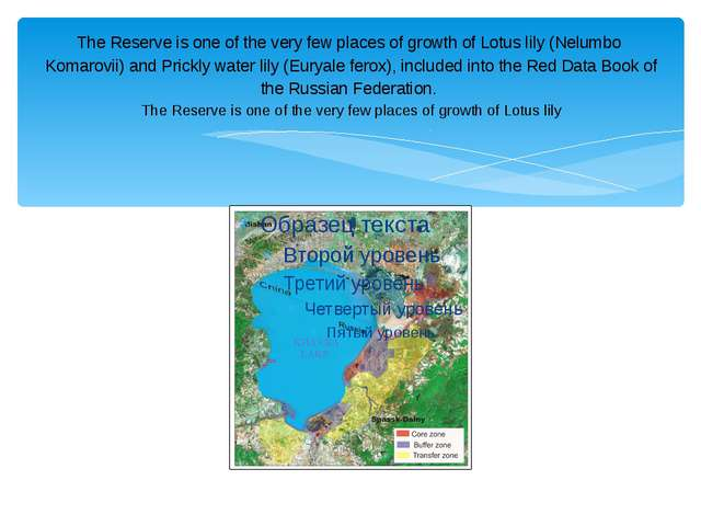 The Reserve is one of the very few places of growth of Lotus lily (Nelumbo Ko...