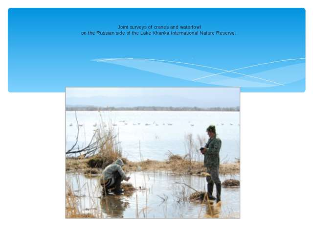 Joint surveys of cranes and waterfowl on the Russian side of the Lake Khanka...