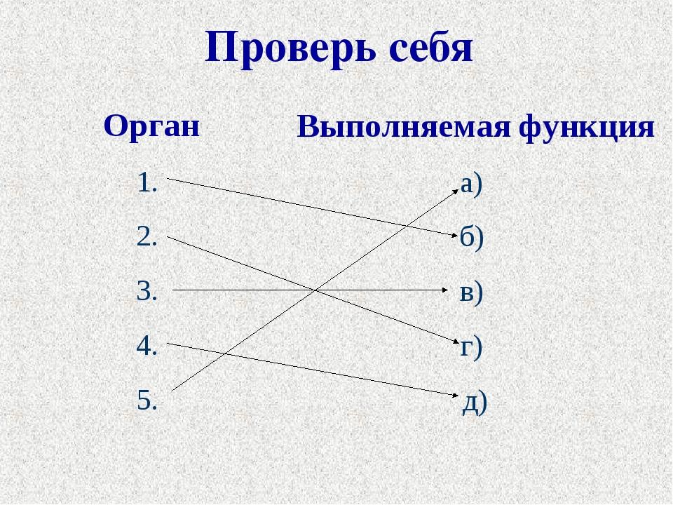 Проверь себя Орган 1. 2. 3. 4. 5. Выполняемая функция а) б) в) г) д)