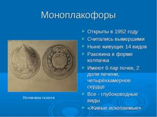 Моноплакофоры Открыты в 1952 году Считались вымершими Ныне живущих 14 видов Р