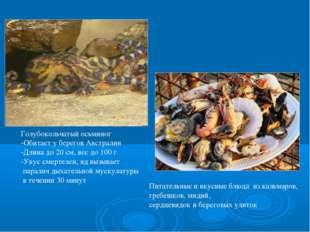 Голубокольчатый осьминог -Обитает у берегов Австралии -Длина до 20 см, вес до