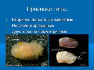 Признаки типа: Вторично-полостные животные Несегментированные Двусторонне-сим