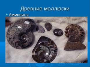 Древние моллюски Аммониты
