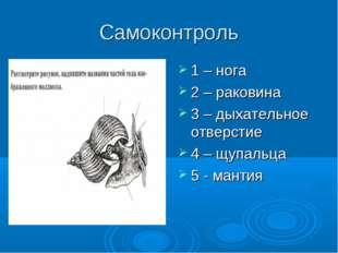 Самоконтроль 1 – нога 2 – раковина 3 – дыхательное отверстие 4 – щупальца 5 -