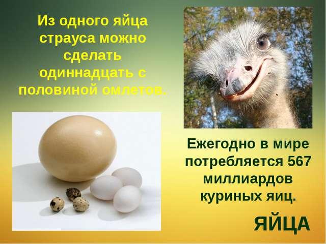 Из одного яйца страуса можно сделать одиннадцать с половиной омлетов. ЯЙЦА Еж...