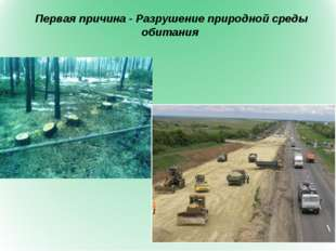 Первая причина - Разрушение природной среды обитания