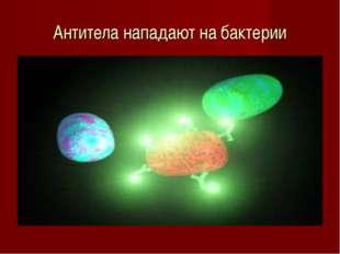 Антитела нападают на бактерии