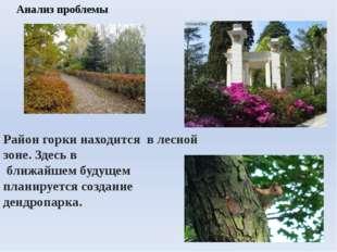 Район горки находится в лесной зоне. Здесь в ближайшем будущем планируется со
