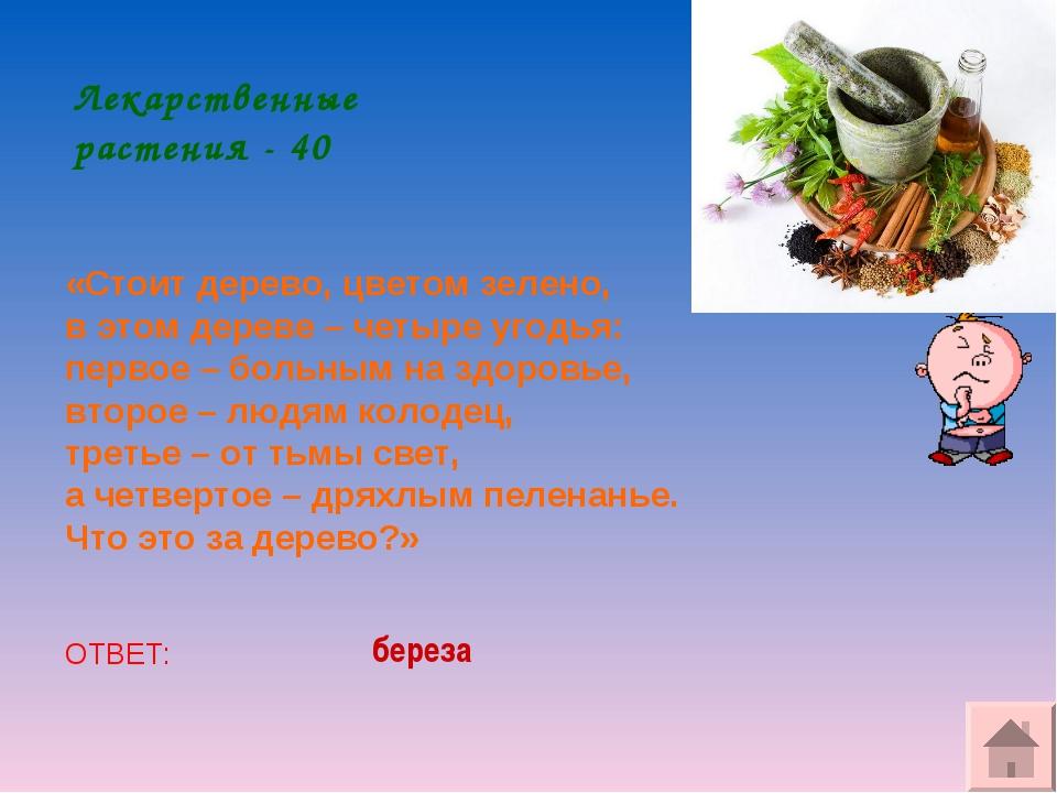 Лекарственные растения - 40 «Стоит дерево,цветом зелено, в этом дереве – чет...