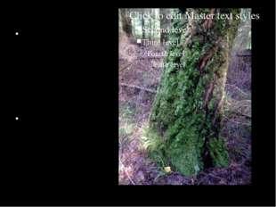 с северной стороны деревья, камни, деревянные, черепичные и шиферные кровли
