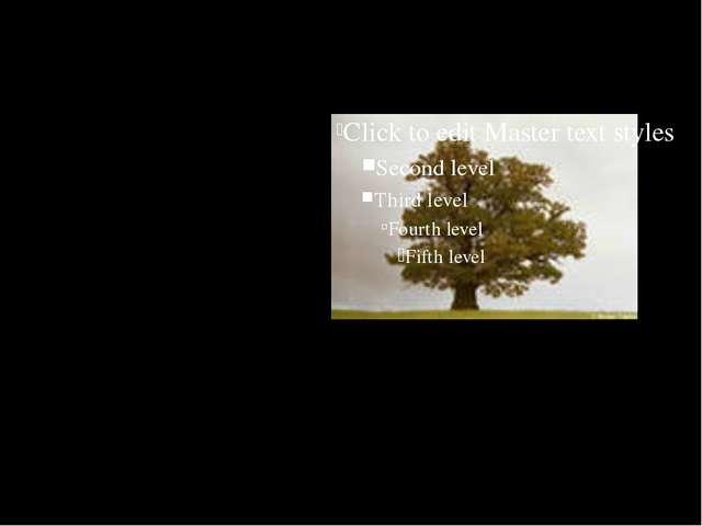 на отдельно стоящем дереве самые густые ветви, как правило, растут с южной ст...