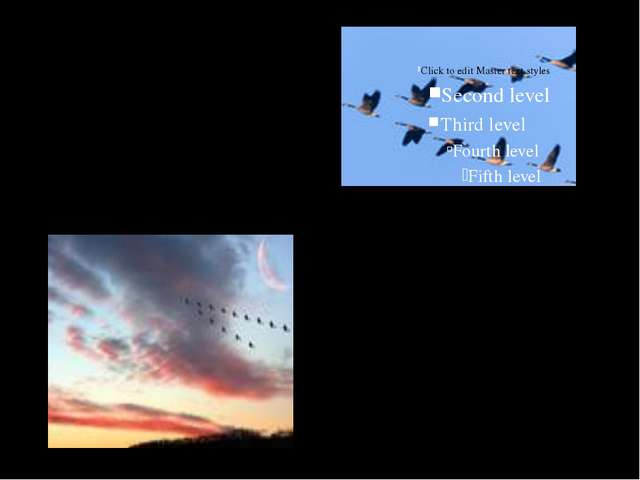 · перелетные птицы весной летят на север, а осенью на юг