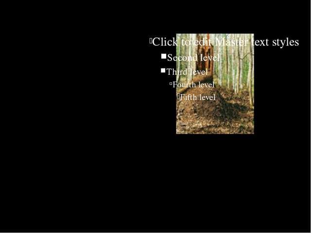 муравейники располагаются с южной стороны деревьев, пней и кустов;