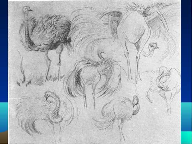 Рисунки животных для зарисовки
