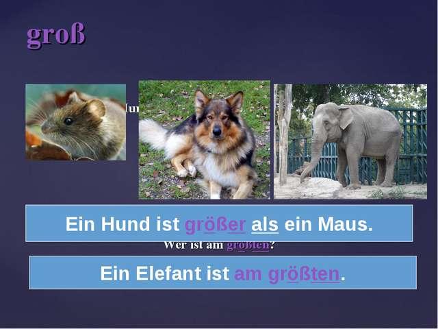 Maus Hund Elefant Wer ist größer – ein Maus oder ein Hund? Wer ist am größte...