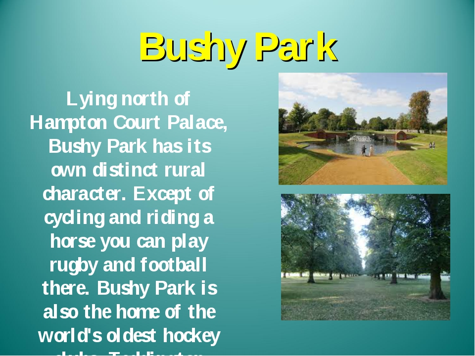 Bushy Park Lying north of Hampton Court Palace, Bushy Park has its own distin...
