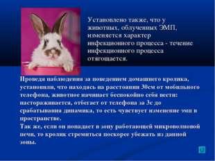 Установлено также, что у животных, облученных ЭМП, изменяется характер инфекц