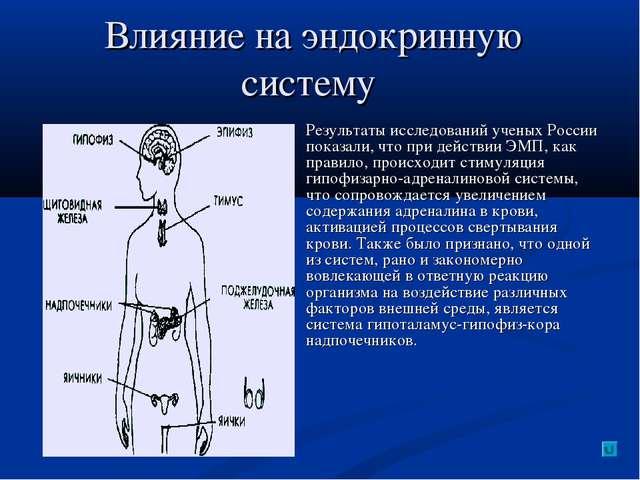Влияние на эндокринную систему Результаты исследований ученых России показали...