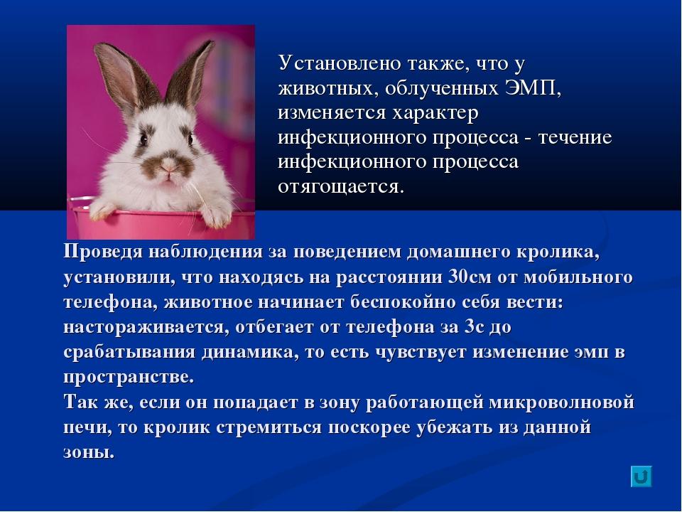 Установлено также, что у животных, облученных ЭМП, изменяется характер инфекц...