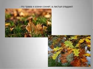 - Но трава к осени сохнет, а листья опадают.