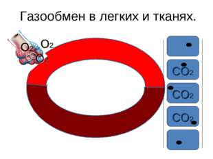 Газообмен в легких и тканях. О2 О2 О2 СО2 СО2 СО2