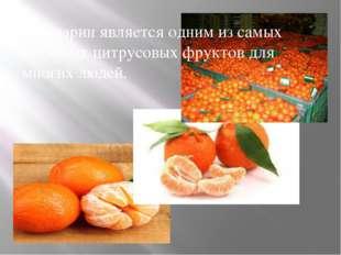 Мандарин является одним из самых любимых цитрусовых фруктов для многих людей.