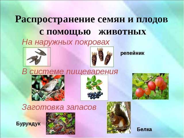 Распространение семян и плодов с помощью животных На наружных покровах череда...