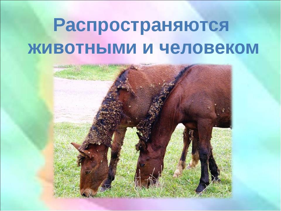 Распространяются животными и человеком
