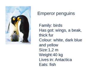 Emperor penguins Family: birds Has got: wings, a beak, thick fur Colour: whit