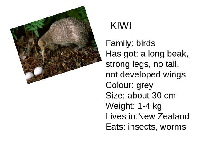 KIWI Family: birds Has got: a long beak, strong legs, no tail, not developed...