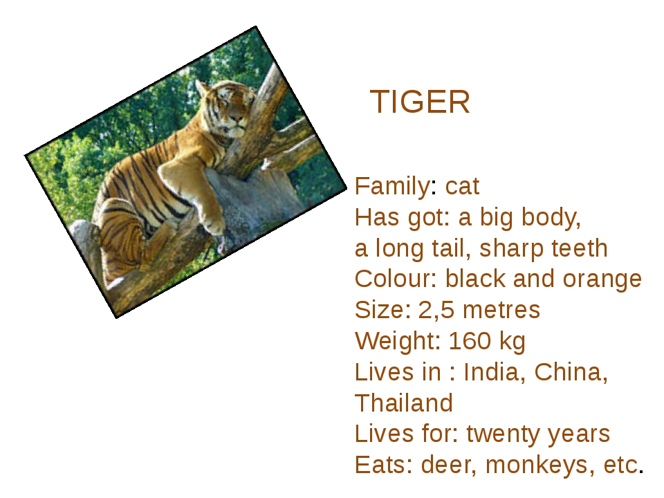 TIGER Family: cat Has got: a big body, a long tail, sharp teeth Colour: black...