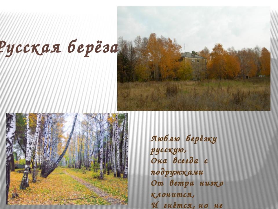 Люблю берёзку русскую, Она всегда с подружками От ветра низко клонится, И гнё...