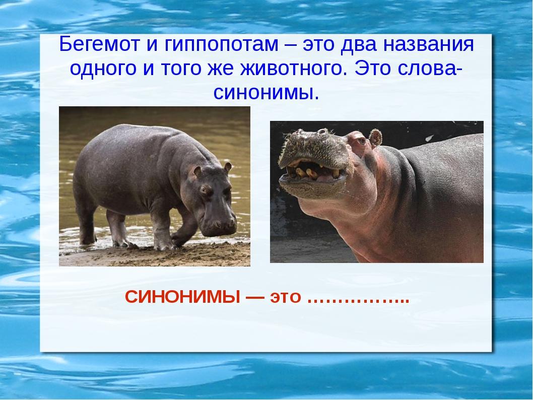 Бегемот и гиппопотам – это два названия одного и того же животного. Это слова...