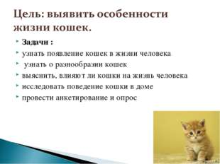 Задачи : узнать появление кошек в жизни человека узнать о разнообразии кошек
