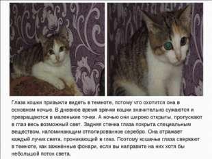 Глаза кошки привыкли видеть в темноте, потому что охотится она в основном ноч