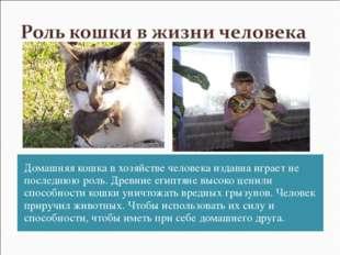 Домашняя кошка в хозяйстве человека издавна играет не последнюю роль. Древние