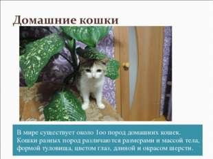 В мире существует около 1оо пород домашних кошек. Кошки разных пород различаю