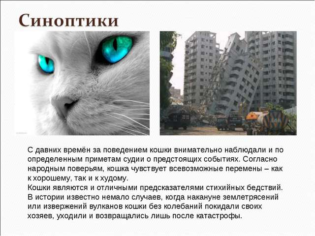 С давних времён за поведением кошки внимательно наблюдали и по определенным п...