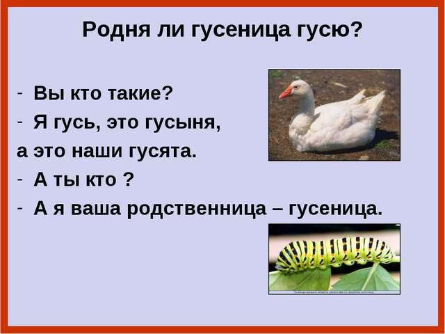 Родня ли гусеница гусю? Вы кто такие? Я гусь, это гусыня, а это наши гусята....