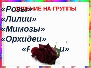 ДЕЛЕНИЕ НА ГРУППЫ «Розы» «Лилии» «Мимозы» «Орхидеи» «Ромашки»