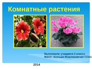 Комнатные растения Выполнили: учащиеся 2 класса МБОУ «Больше-Машляковская СОШ