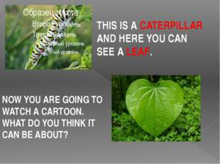 THIS IS A CATERPILLAR AND HERE YOU CAN SEE A LEAF. NOW YOU ARE GOING TO WATC
