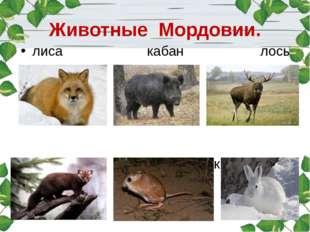 Животные Мордовии. лиса кабан лось куница тушканчик заяц-беляк