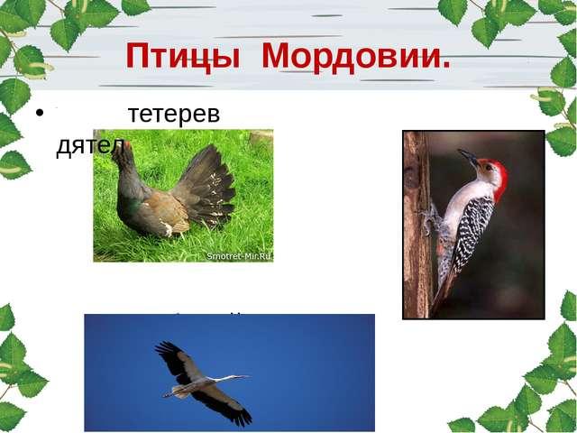 Птицы Мордовии. тетерев дятел аист белый