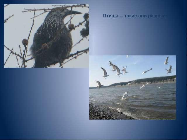 Птицы… такие они разные»
