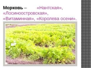 Морковь – «Нантская», «Лосиноостровская», «Витаминная», «Королева осени».