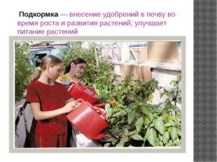 Подкормка — внесение удобрений в почву во время роста и развития растений; у