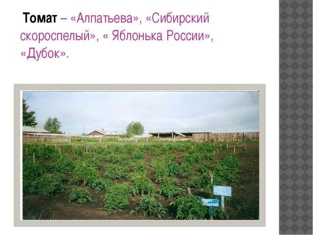 Томат – «Алпатьева», «Сибирский скороспелый», « Яблонька России», «Дубок».
